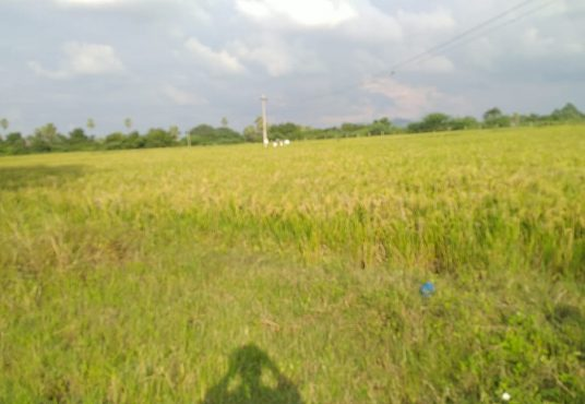 agricultural land for sale in jangaon